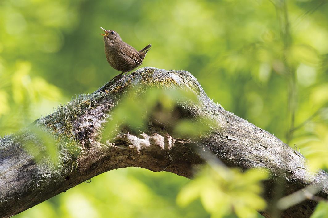 小鳥のさえずり